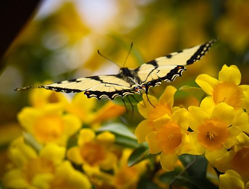 Butterflies-1369