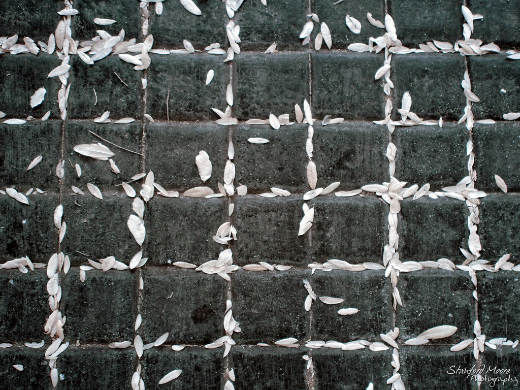 IMAGE: http://farm6.static.flickr.com/5180/5533265031_258e356cb9_b.jpg