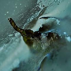 Water Mirror - Wasser Spiegel --- Aktion: Glas Wrfel Wasser ~ Glas Cube Water (hedbavny) Tags: vienna wien autumn winter summer macro reflection art water glass square austria mirror sketch sterreich spring wasser underwater sommer spiegel kunst diary herbst jahreszeit pflanze sketchbook september note squareformat cube mementomori mold rotten transition decomposition makro blatt spiegelung tagebuch glas wrfel glaswrfel aktion frhling vanitas quadrat macrolens unterwasser undine schimmel verfall leafe verwelkt skizze aquaticplant notiz melancholie wasserpflanze hydrophyte wasserspiegel skizzenbuch bergang wienvienna sterreichaustria glasscube aktionismus anglesanglesangles scheintod cmwdblue transitio hedbavny ingridhedbavny