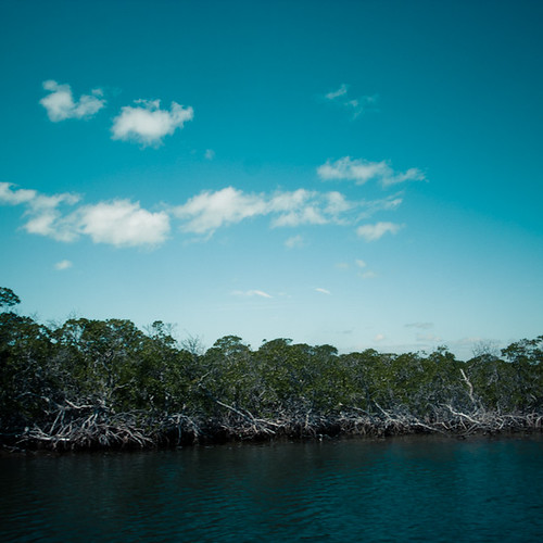 Sky, Black Mangrove, Waterway, John Pennekamp Park, Key Largo Florida
