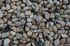 TAKETONE_GROUND_0085 (Game Texture Images) Tags: stone earth ground pebble gravel pebbletexture stonetexture groundtexture graveltexture pebbleground gravelground