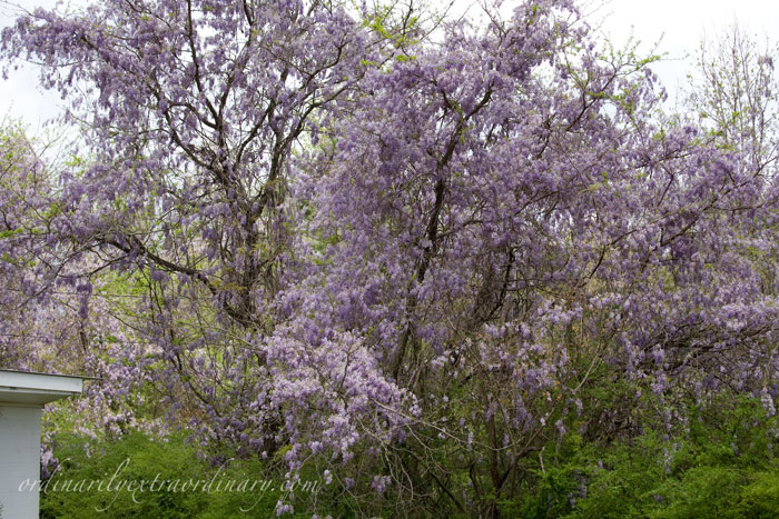 Spring_032611_0006web