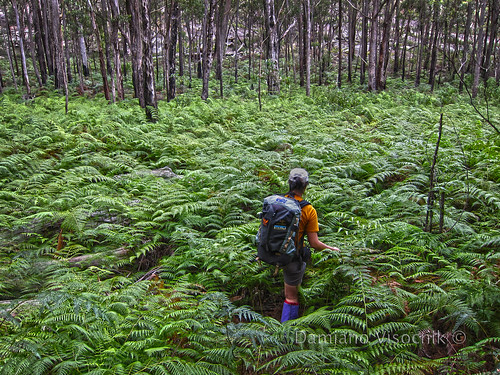 Fern bush bashing_1_c