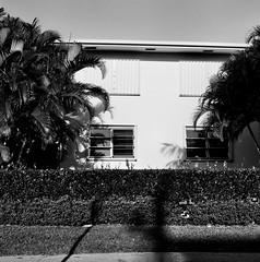 House (12th St David) Tags: bw tree 120 6x6 film modern mediumformat concrete shadows florida palm moderne artdeco lantana palmbeach rolleicord fujineopan100acros lakeworth manalapan mittelformat rolleicordv formatomedio xenar75mmf35  lemoyenformat