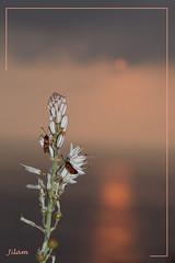 courageux du matin (jeannot06) Tags: fleur soleil espagne insectes lever andalousie leverdesoleil