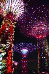 Cocktail Of Colours (TablinumCarlson) Tags: singapur singapore lion city garden red dot skyline marina bay asien asia far east leica republic 新加坡共和国 சிங்கப்பூர் குடியரசு sands hotel singapura architektur landmark gardens lightshow lichtshow lasershow laser led farben colours colors gardensbythebay dlux dlux6