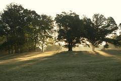 Rockford Park early morning_3 (tcd123usa) Tags: leicadlux4 rockfordpark wilmingtondelaware landscape