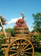 La charrette fleurie (MAPNANCY) Tags: charrette fleurs ciel roue dcor