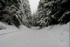 Garibaldi Park Road Simplified (Michael Garson) Tags: road trees winter cloud snow canada cold tree clouds forest nikon covered slippery simplified
