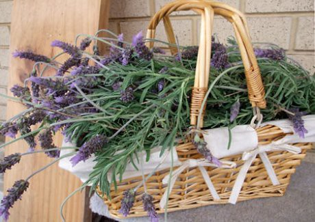 lavender-basket