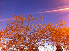 sunset tree leaves gold iphone (Photo: Namiei on Flickr)
