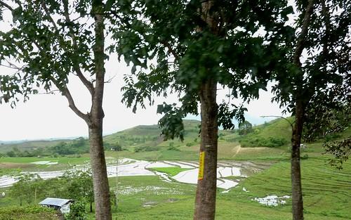 Negros-San Carlos-Bacolod (62)
