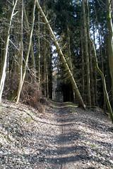 Ungewisses Ziel (onnola) Tags: trees forest germany deutschland shadows path tunnel unknown wald bume schatten dunkel koblenz weg rheinlandpfalz pfad geheimnis rhinelandpalatinate arzheim ungewiss griesenbachtal