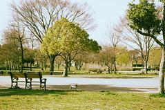 Traveling alone (motoshi ohmori) Tags: park dog plant green bench tokyo pentax     kx pentaxkx toneri