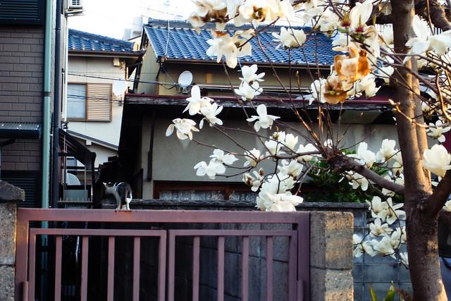 Today's Cat@2011-04-01