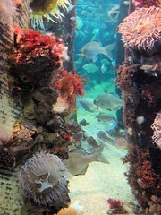 california aquarium mba monterey montereybayaquarium montereybay mbari