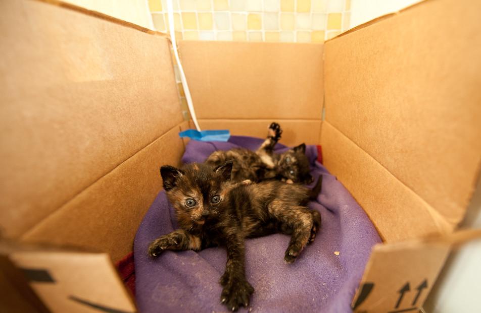 I am Kitten!