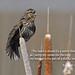 Bird singing praise