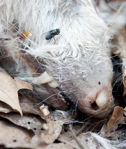 Needham Opossum: Day 16