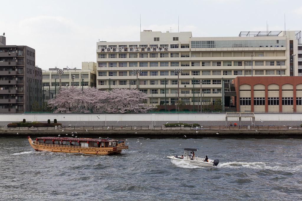 Tokyo Ryogoku Sakura 5