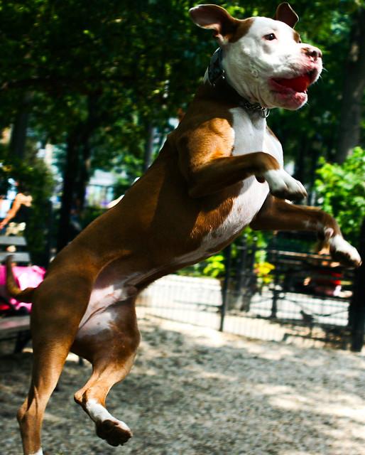 Dogrun NY - Fast shutter speed