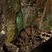 Cueva de los Verdes_6
