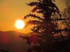 never touch the sun (Seio) Tags: sunset sun 30 canon three is tramonto volterra albero controluce sx
