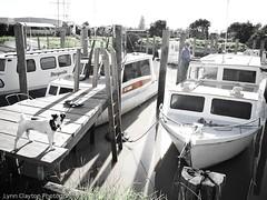 Dargaville Marina (kiwigran) Tags: dog marina wharf jackrussell launch dargaville buoyant