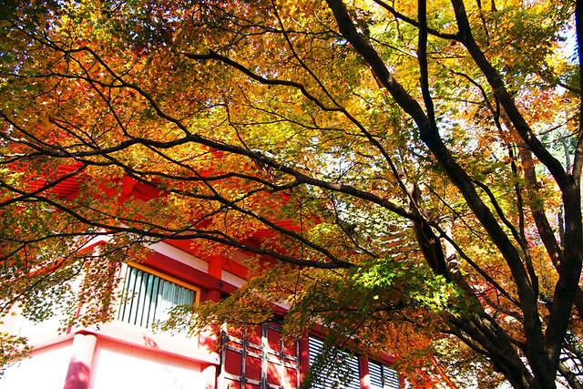 20101120_092544_談山神社_神廟拝所