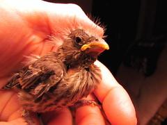 rescue baby macro bird canon wildlife rehab rehabilitation rehabbing