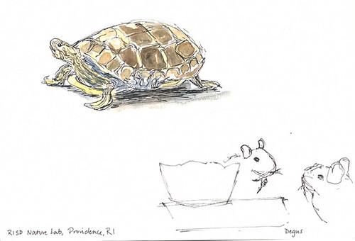 Sketchcrawl 31: Turtle at RISD's Nature Lab, Providence, RI