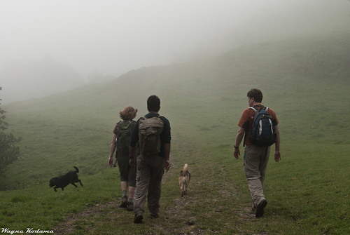 Hiking into the Fog