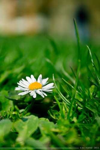 it's spring... ^__^ by ParamitaNa