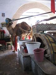 2011-01-tunesie-130-kairouan-medina-bir barouta