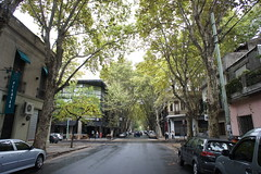 Palermo, Buenos Aires (fk_travels) Tags: street rua buenosaires palermo arvores fitzroy trees argentina fktravels