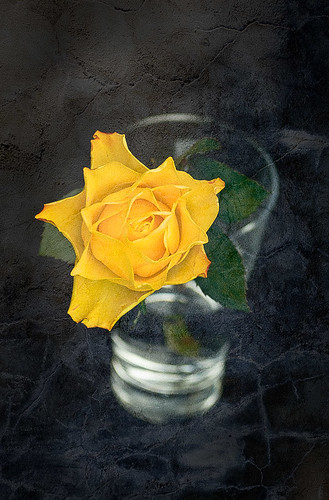 a rose in a glass by targut