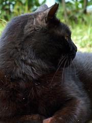 I fiori e i prati e tu (Ciccio Clooney) (Pilot_10) Tags: italy cat © april marche allrightsreserved ciccio 2011