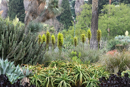 huntington puya chilensis setting