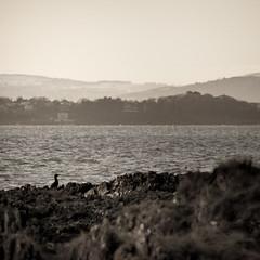 Bangor Bay (The Kitchens) Tags: ireland sea nature water birds animals scenery view pentax bangor down national trust vista northernireland northern nationaltrust ballyholme ulster countydown k7 100300 ballymacormickpoint ballymacormick