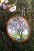 Mirror mirror (ladysue21) Tags: pink flowers cherry mirror blossom prunus refelcion