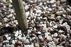 122/365 - 2/5/11 - Gravelicious (James Warwood) Tags: nikon focus dof stump gravel topaz cs5 365project d5000 3652011 wwwjameswarwoodcom