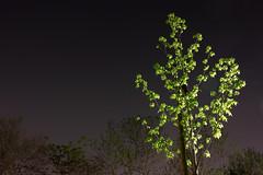 Roadside Tree (halfrain) Tags: tree japan leaf foveon 21mm sd15 1750mm sigma175028 sigma1750mm sigma1750mmf28