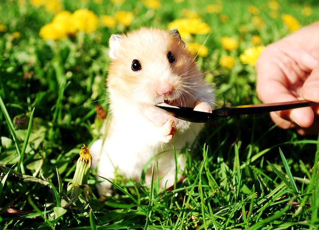 Yogurt is Yummy outdoors, too