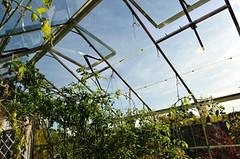 Greenhouse Openings