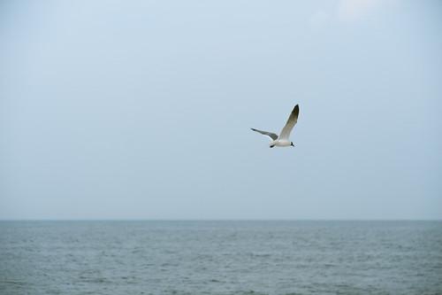 Sandy Hook-30