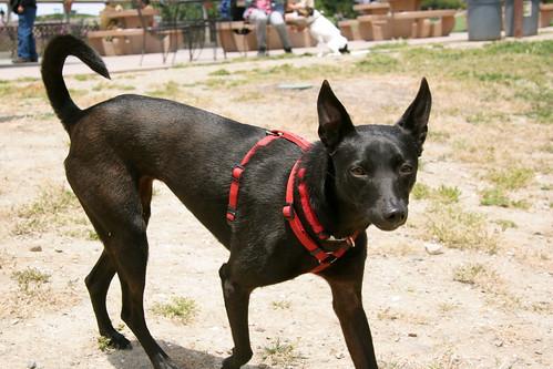 Formosan Mountsin Dog Rescue