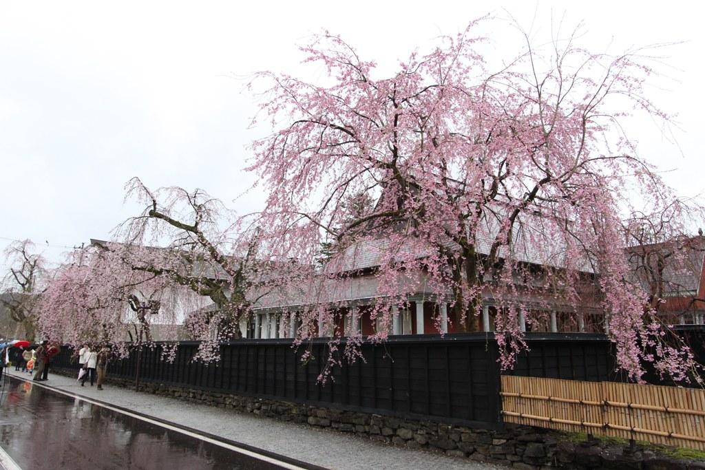 Tohoku Trip 1st day in Akita prefecture, Kakunodate (10)