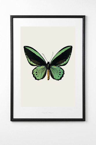 green butterfly print rockett st george