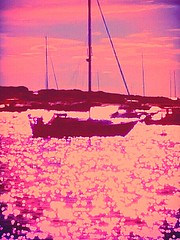 IMG_20160924_121405 (ccbonafied) Tags: view water flowers art design happy oceans yatch boats field sun sunsets sunrise sea seasons seashore seashells collection color fun grateful god created creation creative still more movement light abstract born coastal drama effects effective effervesce first famous get gorgeous hope induce just keep lush mine mist notable open prosperity quickly rustic strong timely uncommon vivant waves excellence xe years zone