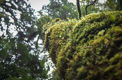 Waipuoa Forest-2-2